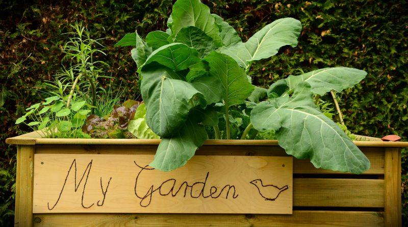 Das Hochbeet - Garten selber machen